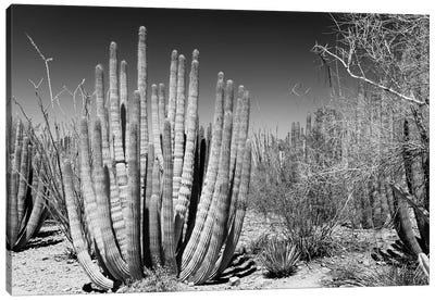 Black Arizona Series - Beautiful Cactus Canvas Art Print