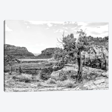 Black Arizona Series - Desert Valley Canvas Print #PHD1669} by Philippe Hugonnard Canvas Art Print