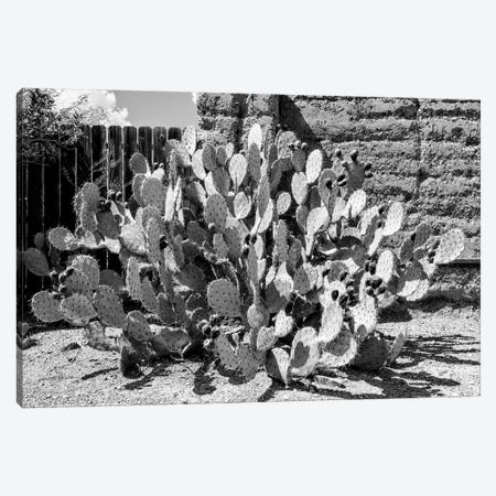 Black Arizona Series - Amazing Prickly Pear Cactus Canvas Print #PHD1680} by Philippe Hugonnard Canvas Art Print