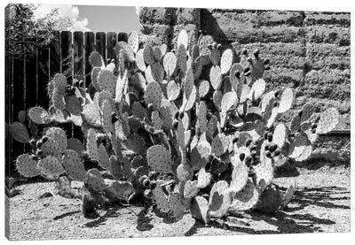 Black Arizona Series - Amazing Prickly Pear Cactus Canvas Art Print