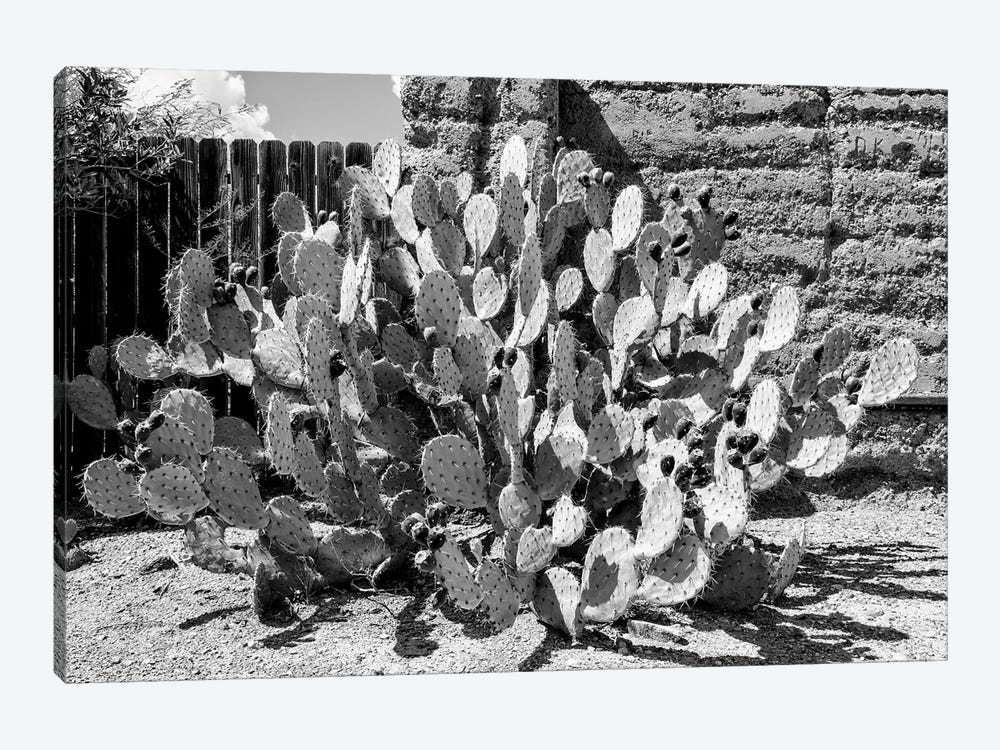 Black Arizona Series - Amazing Prickly Pear Cactus by Philippe Hugonnard 1-piece Canvas Wall Art