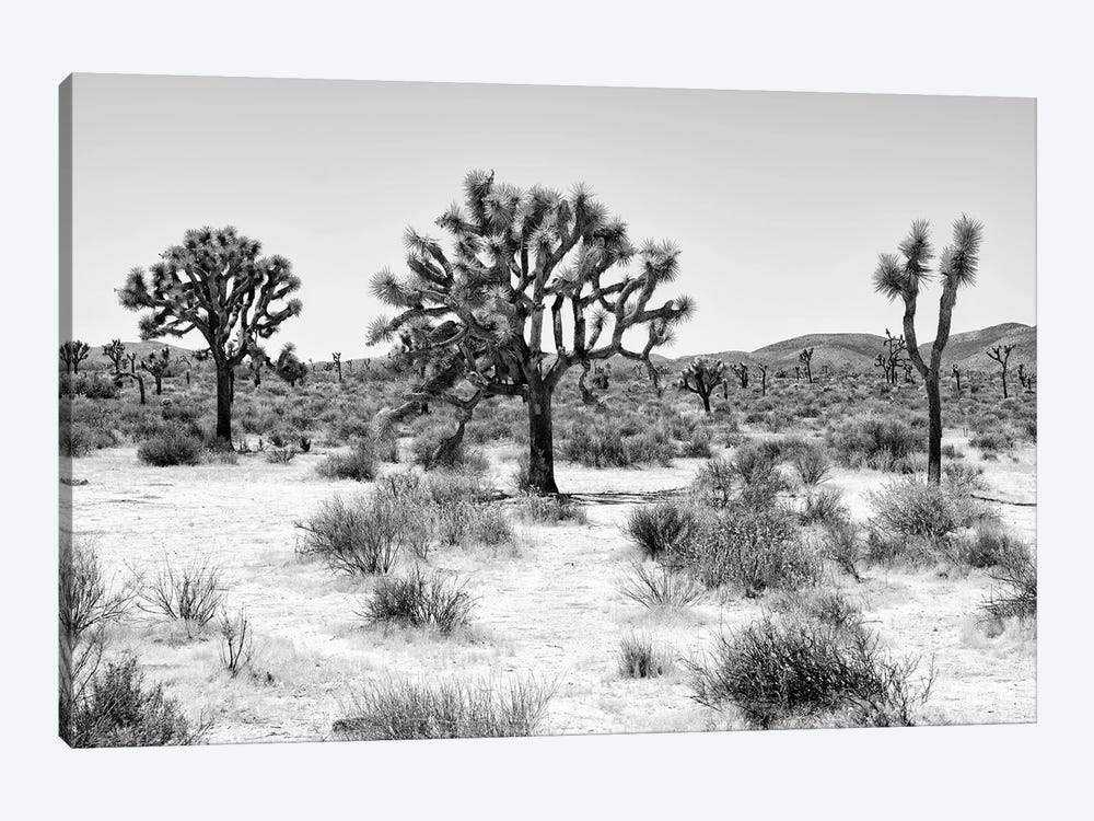 Black Arizona Series - Beautiful Joshua Trees by Philippe Hugonnard 1-piece Art Print