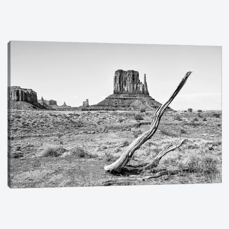 Black Arizona Series - Dry Tree Canvas Print #PHD1694} by Philippe Hugonnard Canvas Art Print
