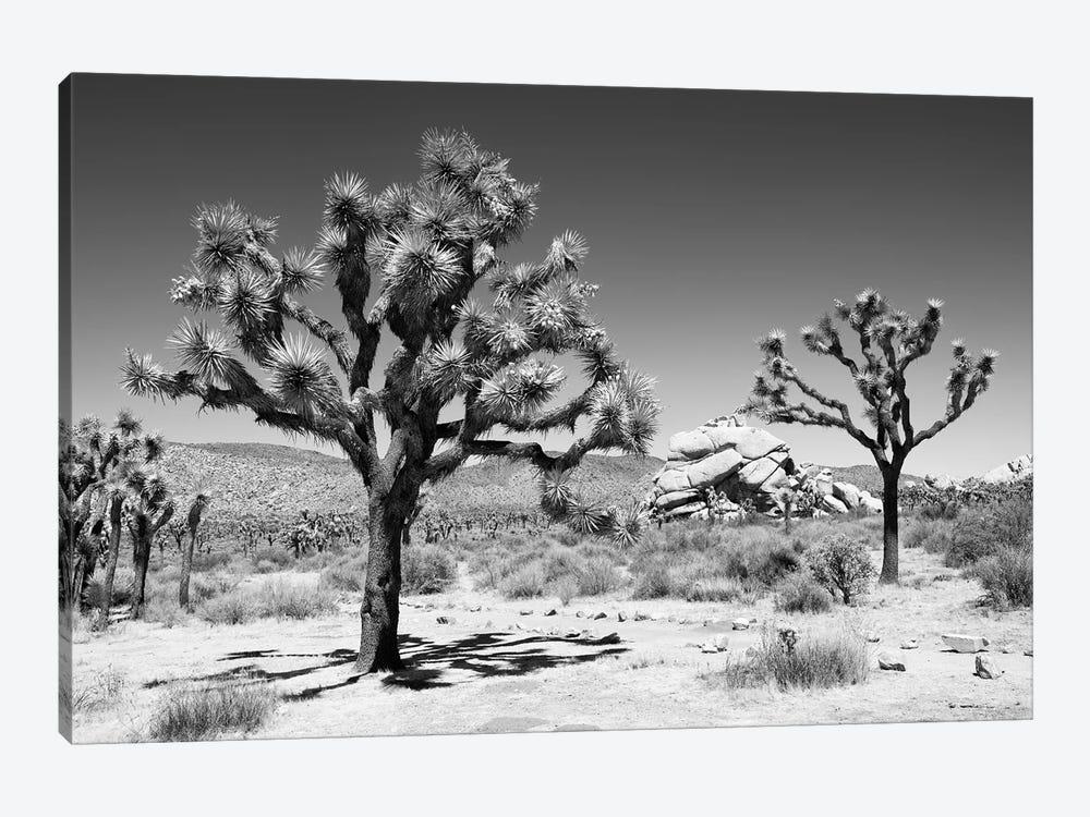 Black Arizona Series - Famous Joshua Trees by Philippe Hugonnard 1-piece Canvas Art