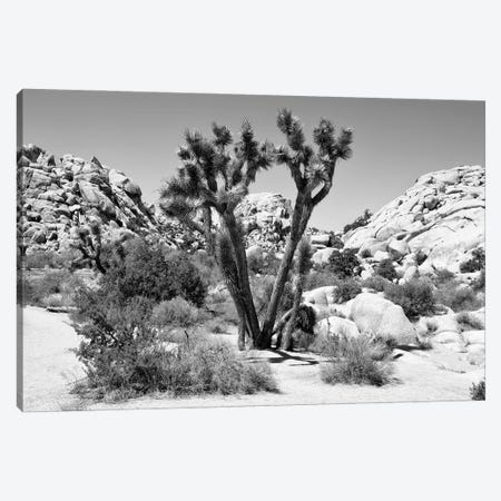 Black Arizona Series - Joshua Tree II Canvas Print #PHD1711} by Philippe Hugonnard Art Print