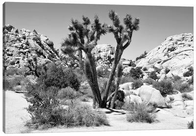 Black Arizona Series - Joshua Tree II Canvas Art Print