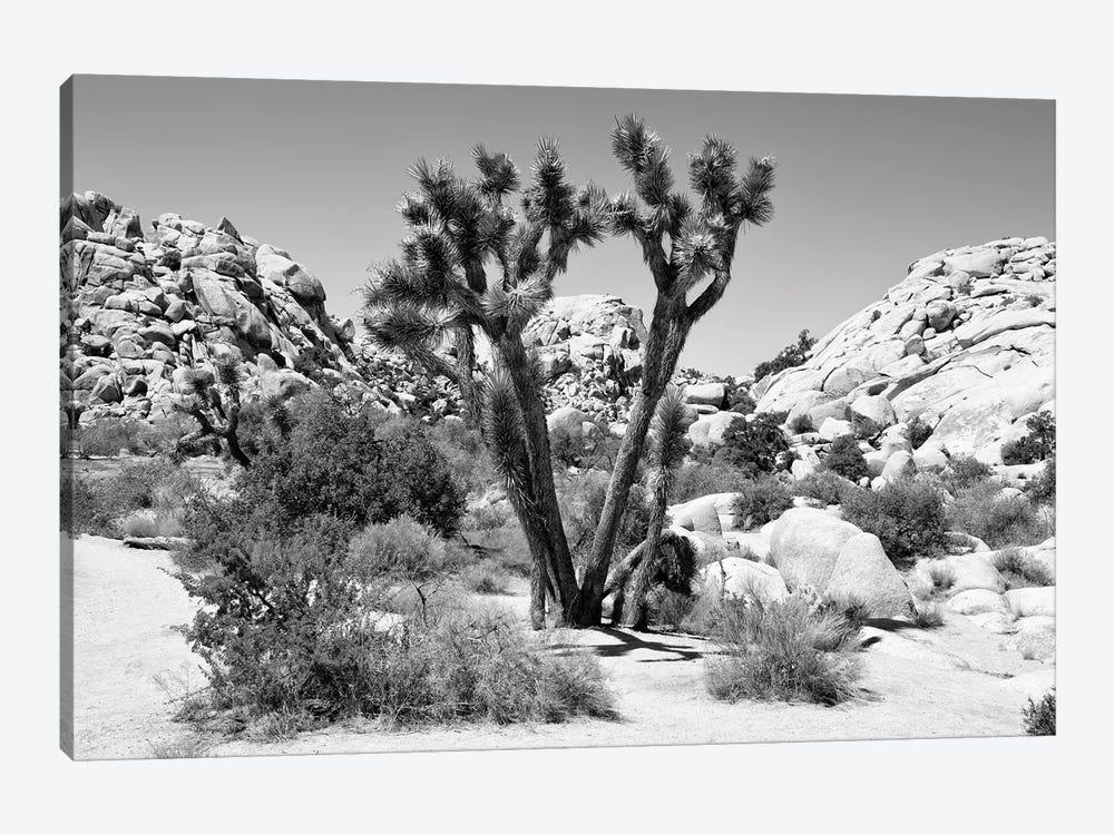 Black Arizona Series - Joshua Tree II by Philippe Hugonnard 1-piece Art Print