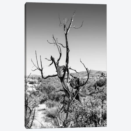 Black California Series - Dry Tree Canvas Print #PHD1744} by Philippe Hugonnard Canvas Print