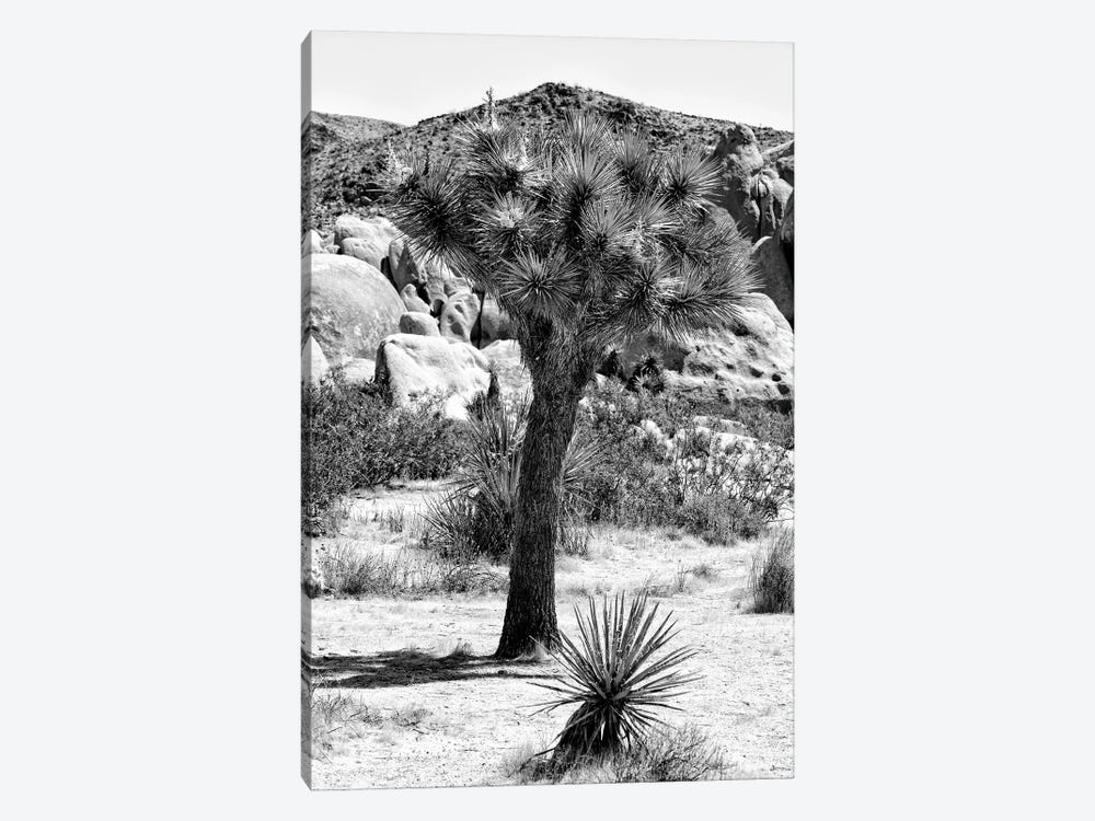 Black California Series - Joshua Tree In The Desert by Philippe Hugonnard 1-piece Canvas Art Print