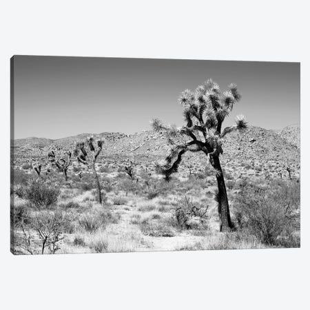 Black California Series - Joshua Trees Desert Canvas Print #PHD1775} by Philippe Hugonnard Canvas Art