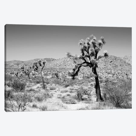 Black California Series - Joshua Trees Desert Canvas Print #PHD1775} by Philippe Hugonnard Canvas Art