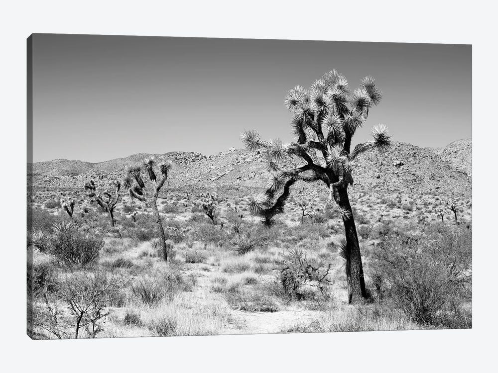 Black California Series - Joshua Trees Desert by Philippe Hugonnard 1-piece Canvas Print