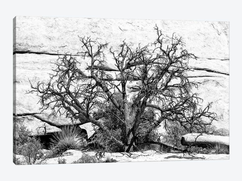 Black California Series - Desert Tree by Philippe Hugonnard 1-piece Canvas Art Print
