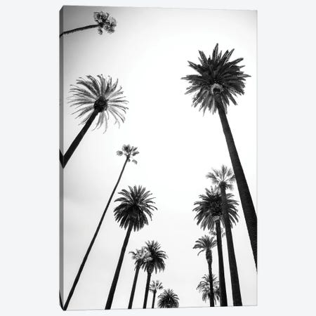 Black California Series - Beverly Hills Palm Trees Alley Canvas Print #PHD1787} by Philippe Hugonnard Canvas Art Print