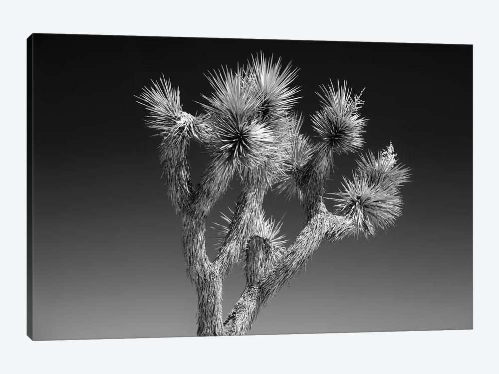 Black California Series - Joshua Tree II by Philippe Hugonnard 1-piece Canvas Art