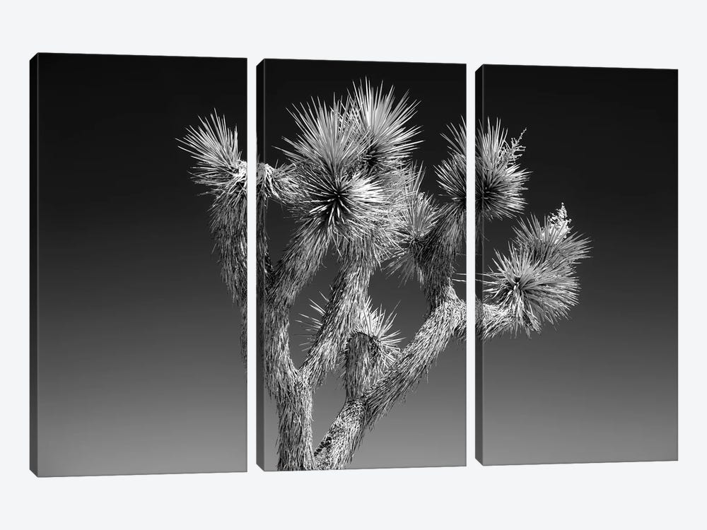 Black California Series - Joshua Tree II by Philippe Hugonnard 3-piece Canvas Wall Art