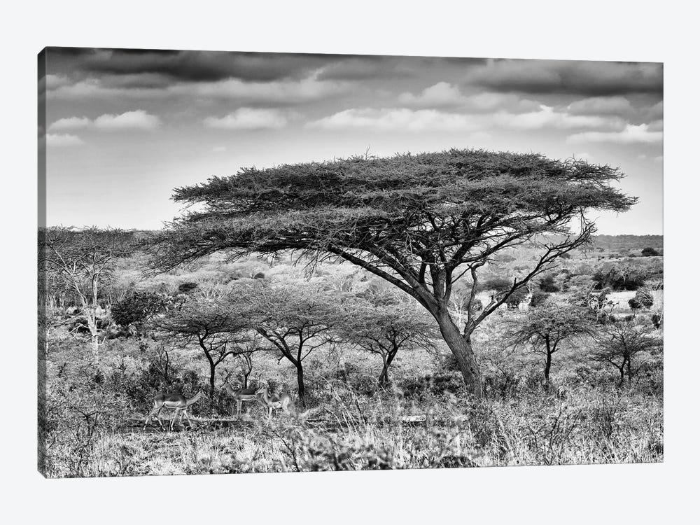 Acacia Trees by Philippe Hugonnard 1-piece Canvas Artwork