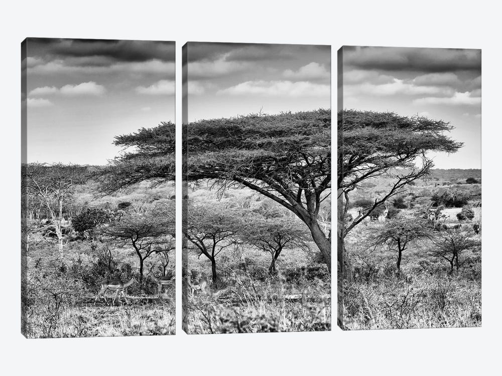 Acacia Trees by Philippe Hugonnard 3-piece Canvas Art