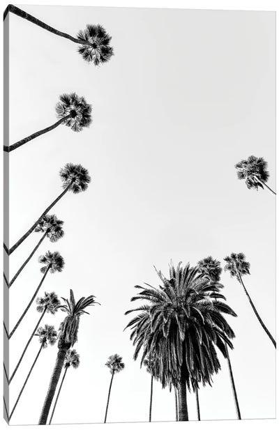 Black California Series - Palm Trees Canvas Art Print