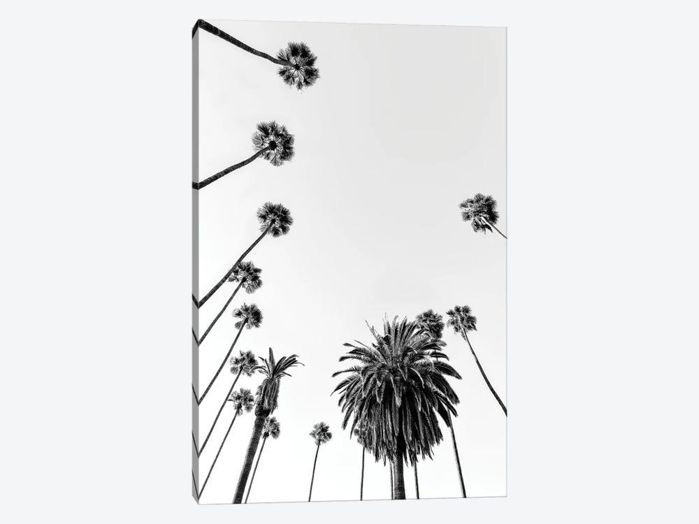 Black California Series - Palm Trees by Philippe Hugonnard 1-piece Canvas Wall Art
