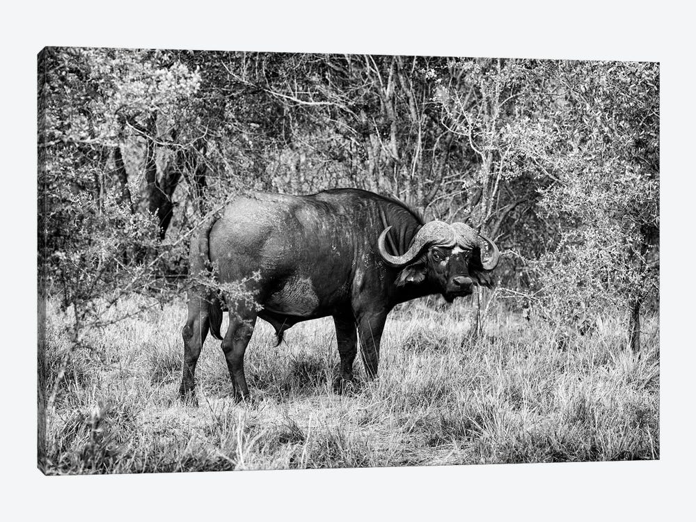 African Cape Buffalo by Philippe Hugonnard 1-piece Art Print