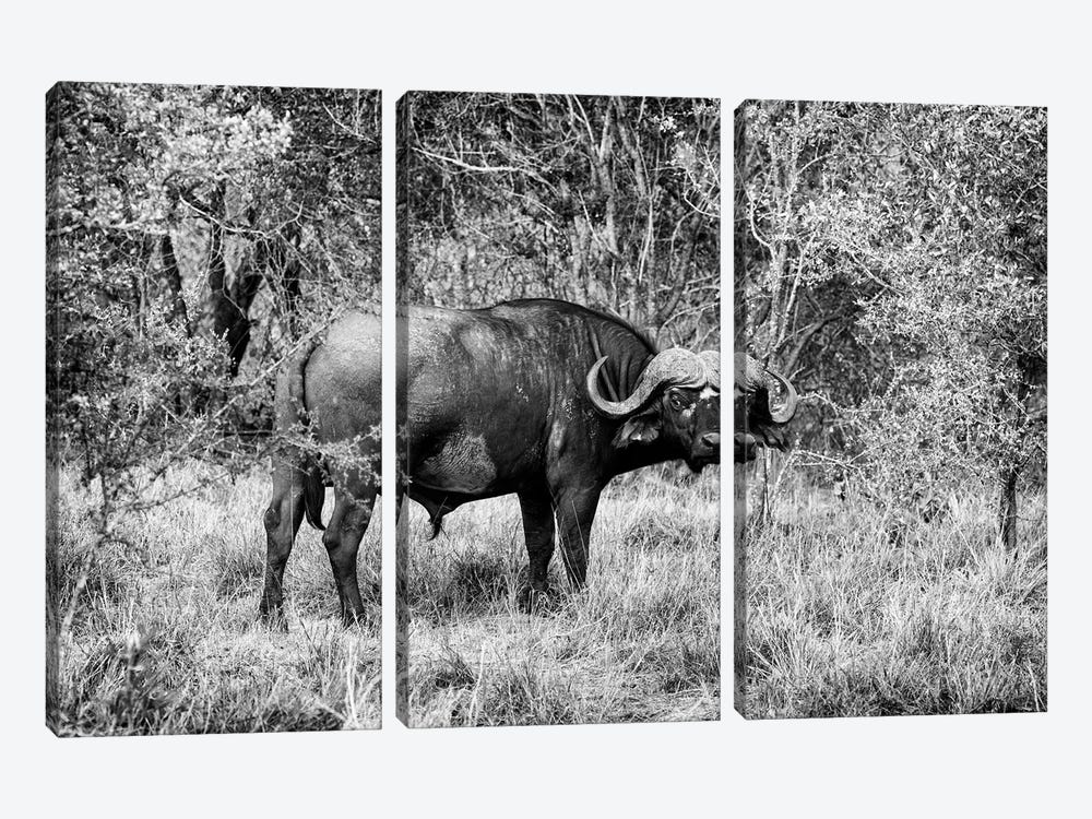 African Cape Buffalo by Philippe Hugonnard 3-piece Canvas Print