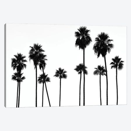 Black California Series - Palm Trees L.A Canvas Print #PHD1808} by Philippe Hugonnard Art Print