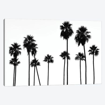 Black California Series - Palm Trees L.A Canvas Print #PHD1808} by Philippe Hugonnard Art Print