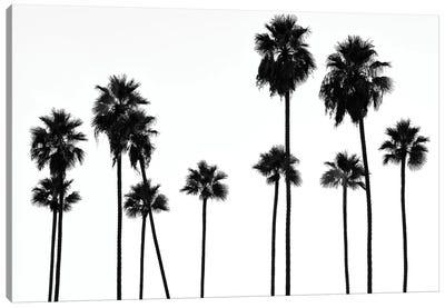 Black California Series - Palm Trees L.A Canvas Art Print