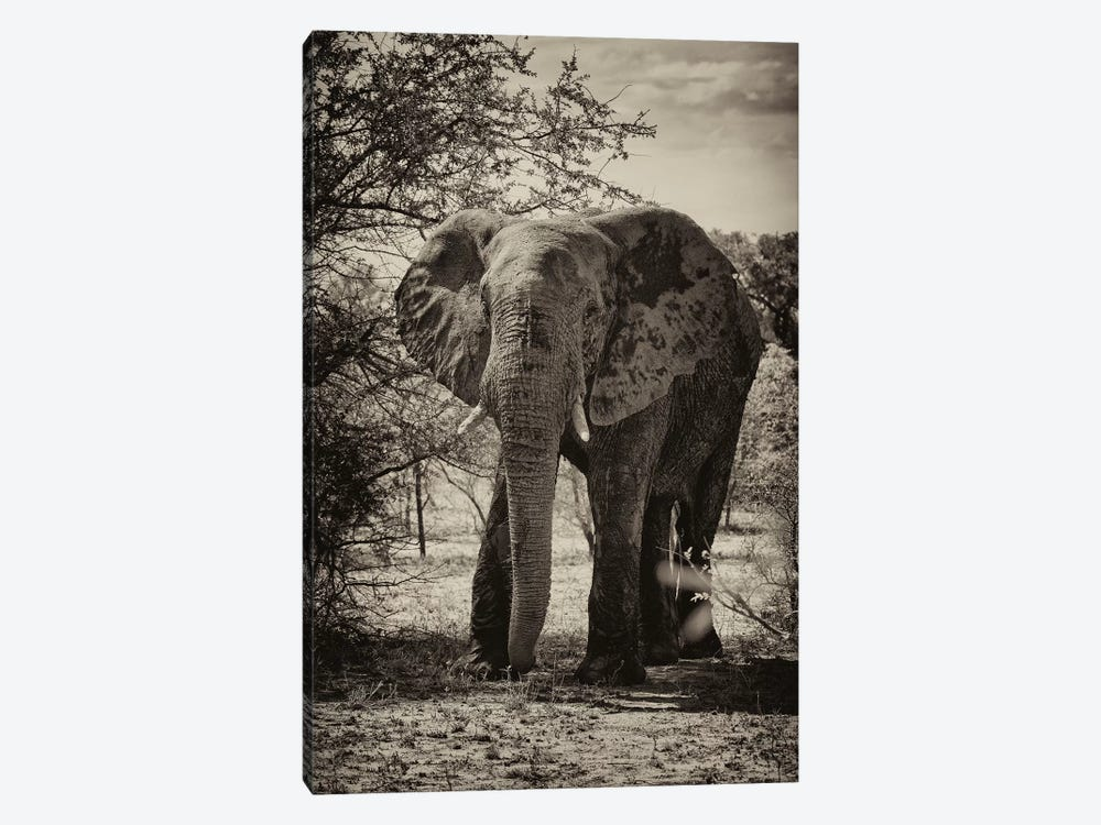 African Elephant Portrait by Philippe Hugonnard 1-piece Art Print