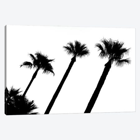 Black California Series - Three Palm Trees Canvas Print #PHD1810} by Philippe Hugonnard Canvas Wall Art