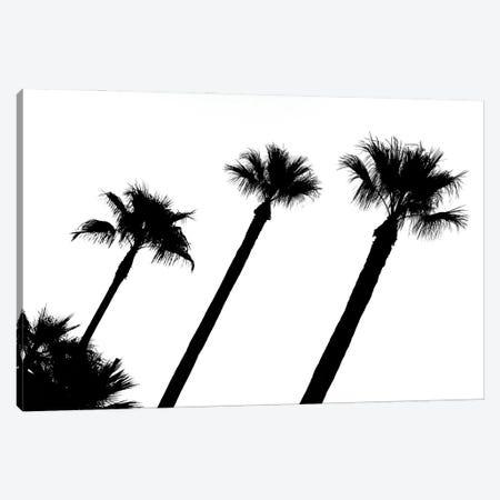 Black California Series - Three Palm Trees Canvas Print #PHD1810} by Philippe Hugonnard Canvas Wall Art