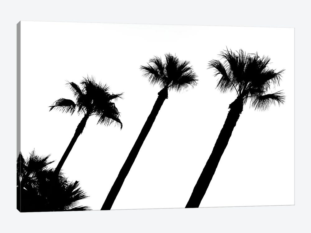 Black California Series - Three Palm Trees by Philippe Hugonnard 1-piece Canvas Wall Art