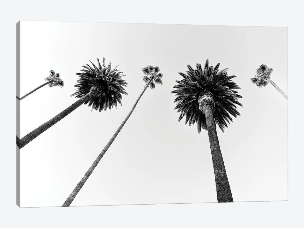 Black California Series - Five Palm Trees by Philippe Hugonnard 1-piece Canvas Art