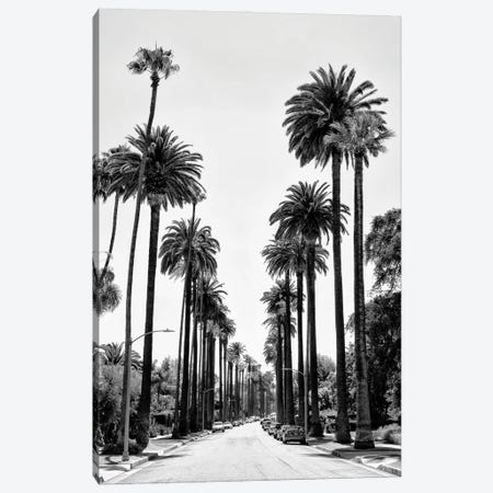 Black California Series - Beverly Hills Palm Alley Canvas Print #PHD1820} by Philippe Hugonnard Canvas Print