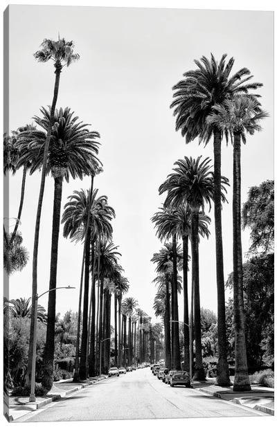 Black California Series - Beverly Hills Palm Alley Canvas Art Print