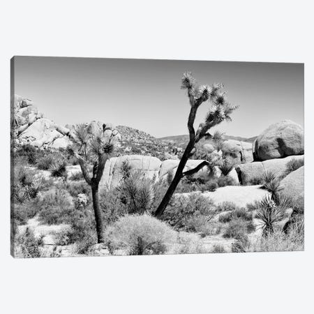 Black California Series - Joshua Tree National Park II Canvas Print #PHD1825} by Philippe Hugonnard Canvas Artwork