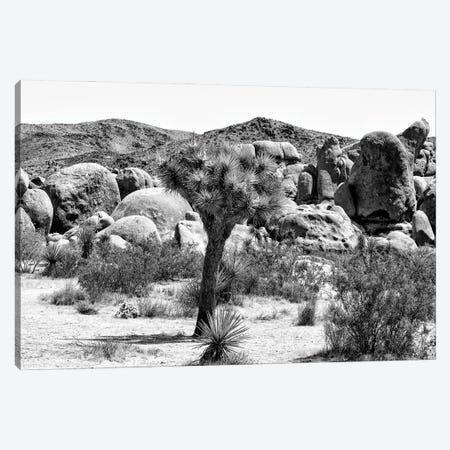 Black California Series - Joshua Tree National Park III Canvas Print #PHD1829} by Philippe Hugonnard Canvas Art Print
