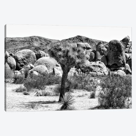 Black California Series - Joshua Tree National Park III Canvas Print #PHD1829} by Philippe Hugonnard Canvas Art Print