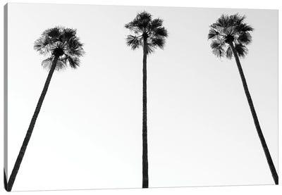 Black California Series - Palm Trees III Canvas Art Print