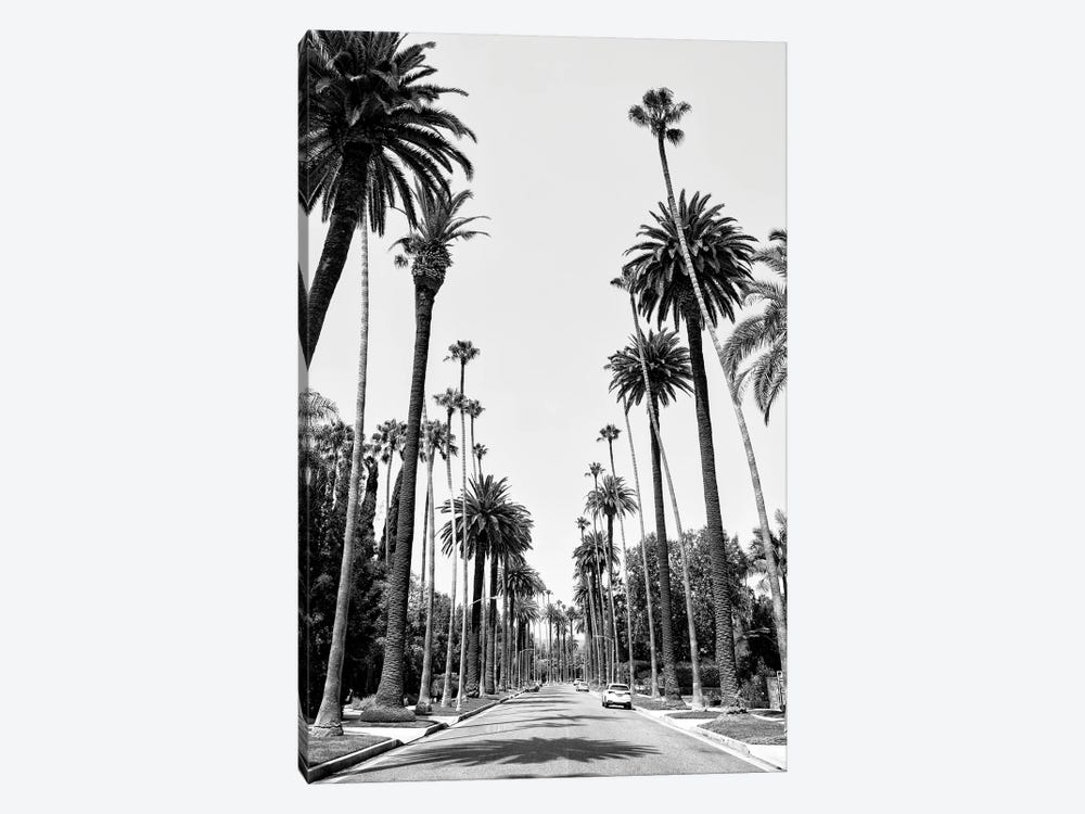Black California Series - Beverly Hills Palm Alley II by Philippe Hugonnard 1-piece Canvas Print
