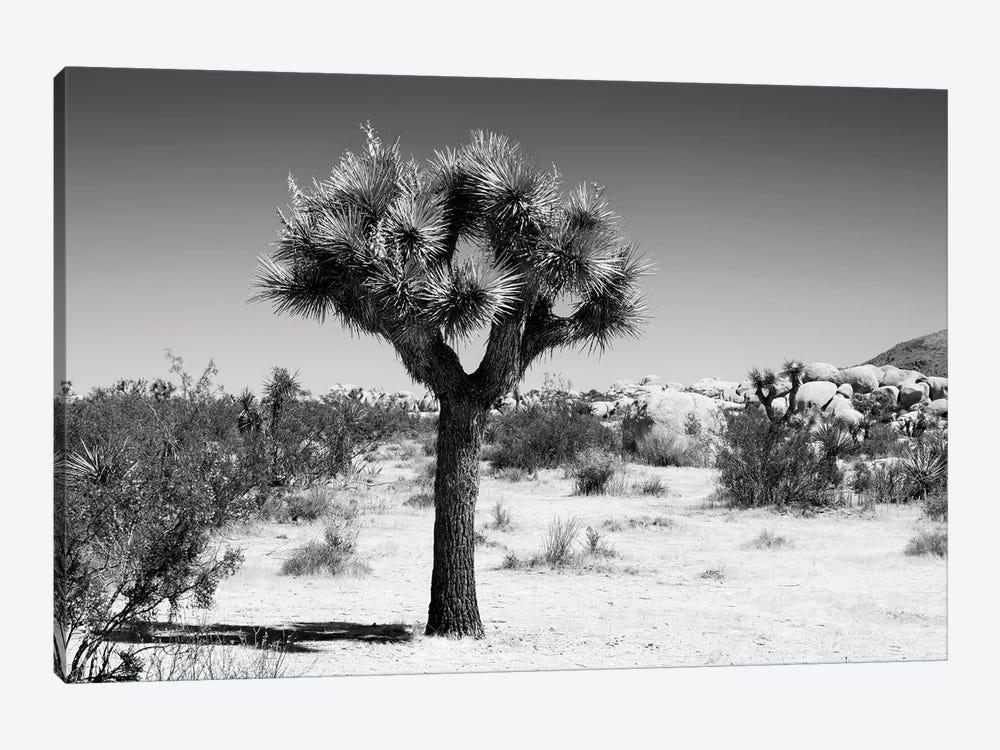Black California Series - The Joshua Tree II by Philippe Hugonnard 1-piece Canvas Artwork