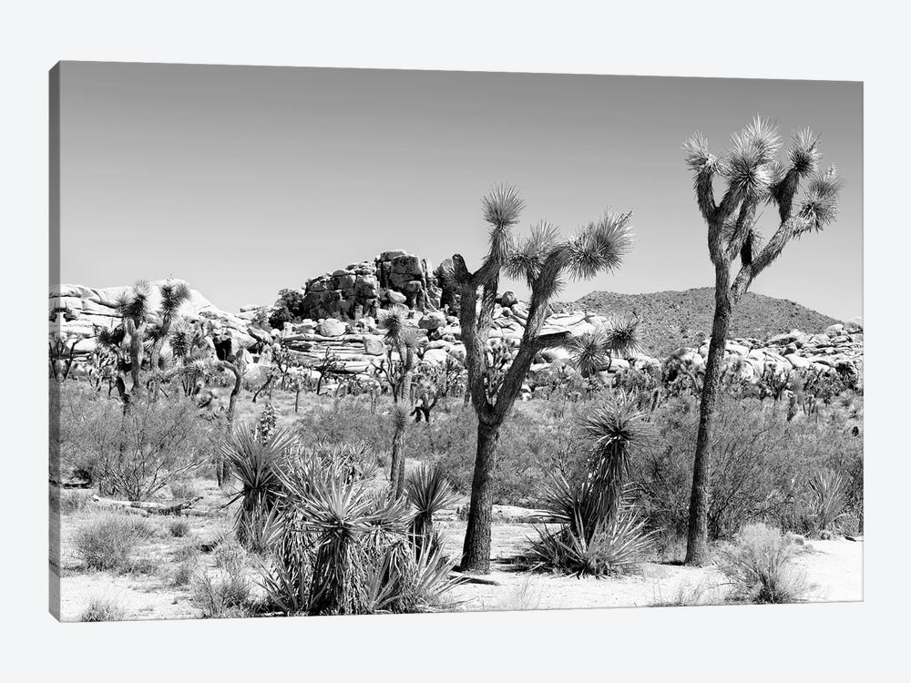 Black California Series - Joshua Tree Boulders Rock by Philippe Hugonnard 1-piece Canvas Art Print