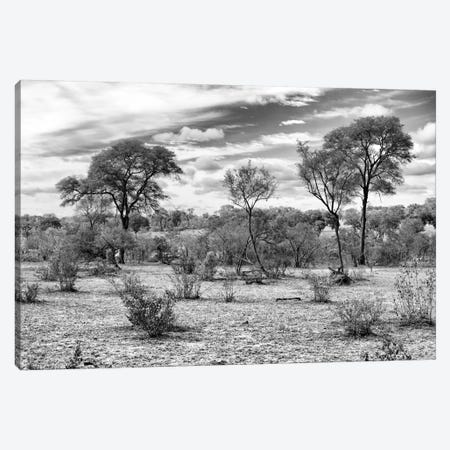 African Landscape  Canvas Print #PHD183} by Philippe Hugonnard Canvas Print