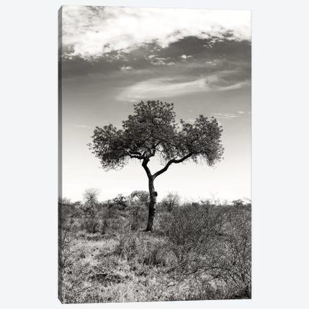 African Landscape II Canvas Print #PHD184} by Philippe Hugonnard Canvas Art