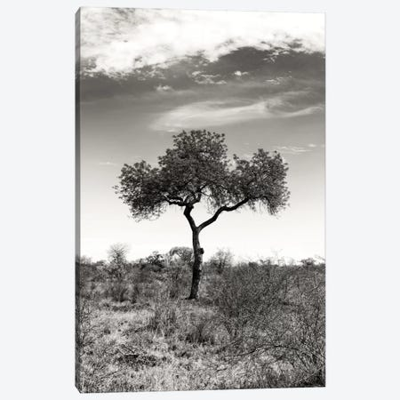 African Landscape II Canvas Print #PHD184} by Philippe Hugonnard Canvas Art