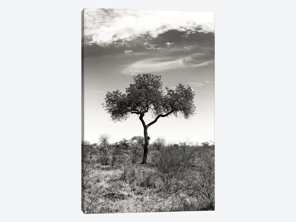 Awesome South Africa Series: African Landscape II by Philippe Hugonnard 1-piece Art Print