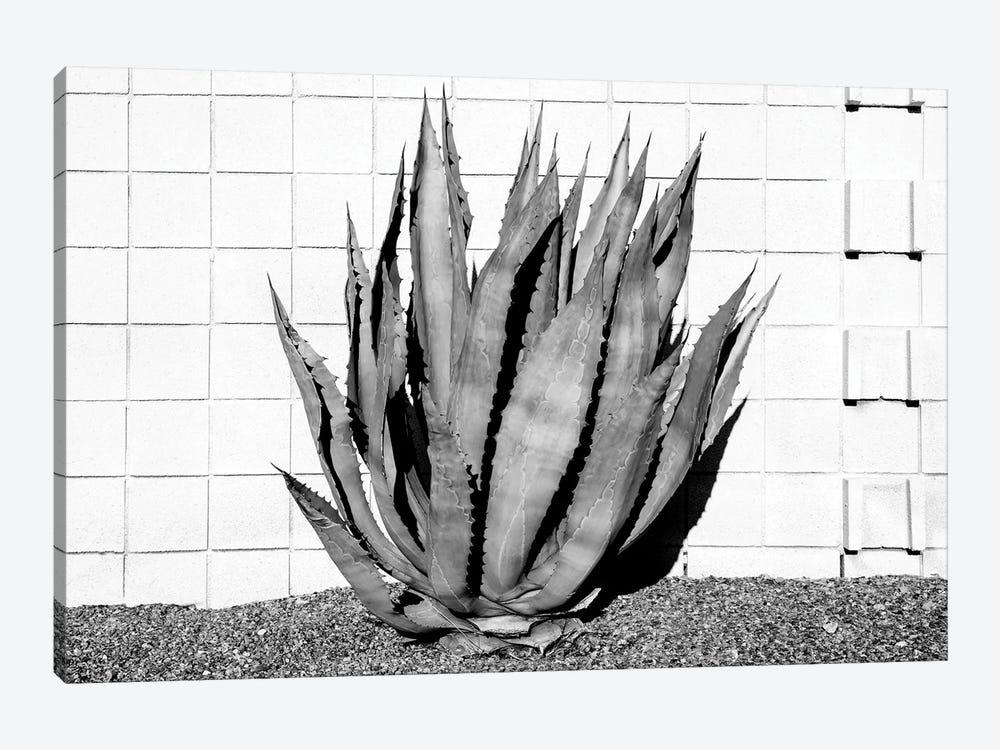 Black California Series - Agave by Philippe Hugonnard 1-piece Canvas Art