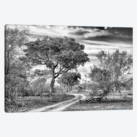 African Landscape with Acacia Tree  Canvas Print #PHD185} by Philippe Hugonnard Canvas Artwork