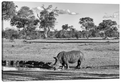 Awesome South Africa Series: Black Rhinoceros Canvas Print #PHD186